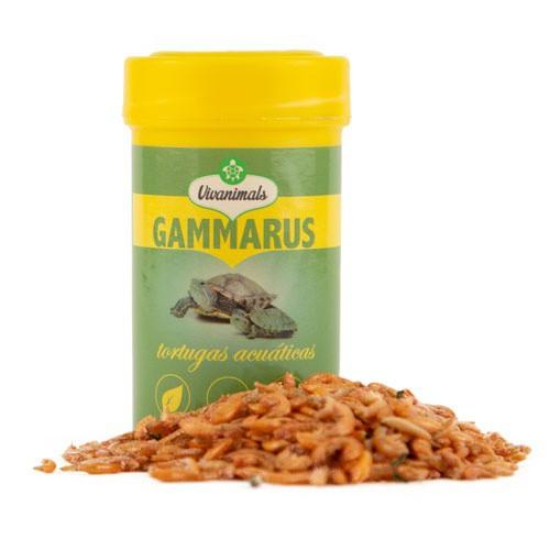 Gammarus for aquatic turtles Vivanimals