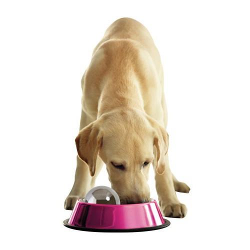 Bola Dog Hog para comer más lento