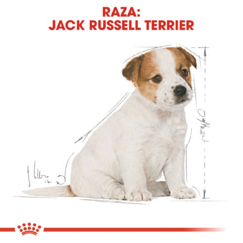 Pienso Royal Canin Jack Russell Terrier Puppy