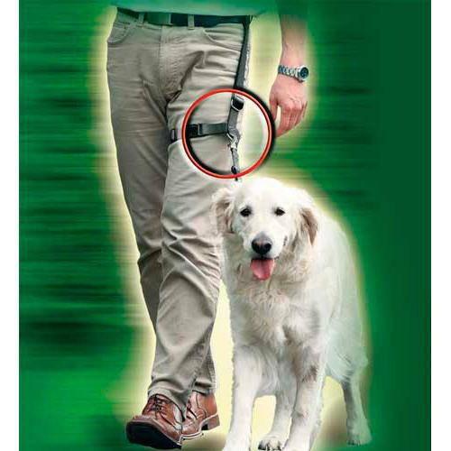 Correa para enseñar a caminar a los perros