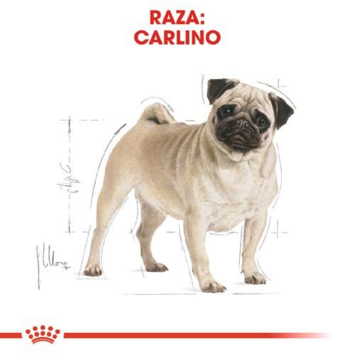 Royal Canin Carlino