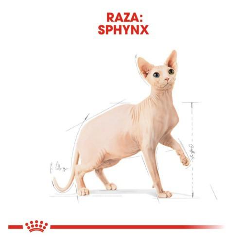 Royal Canin Sphynx pienso para gato adulto