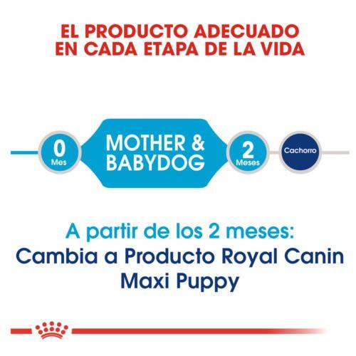 Royal Canin Maxi Starter Mother & Babydog pienso para cachorro