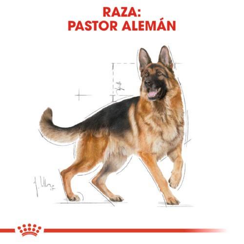 Royal Canin Pastor Alemán Adulto