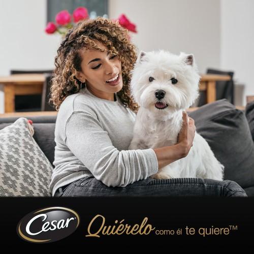 Tarrina Cesar en Gelatina para perros senior