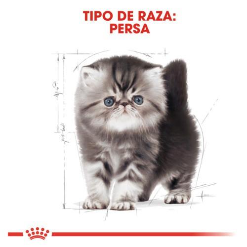 Royal Canin Kitten Persian pienso para gatito