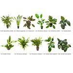.Plantas Naturales para Acuarios Combo 14