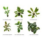 .Plantas Naturales para Acuarios Combo 19