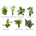 .Plantas Naturales para Acuarios Combo 10
