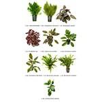 .Plantas Naturales para Acuarios Combo 13