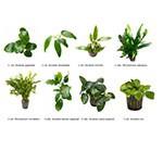 .Plantas Naturales para Acuarios Combo 18