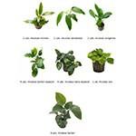 .Plantas Naturales para Acuarios Combo 21