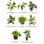 .Plantas Naturales para Acuarios Combo 22