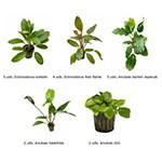 .Plantas Naturales para Acuarios Combo 23