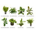 .Plantas Naturales para Acuarios Combo 25
