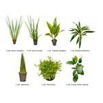 .Plantas Naturales para Acuarios Combo 11
