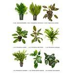 .Plantas Naturales para Acuarios Combo 9