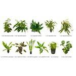 .Plantas Naturales para Acuarios Combo 6