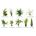 .Plantas Naturales para Acuarios Combo 3